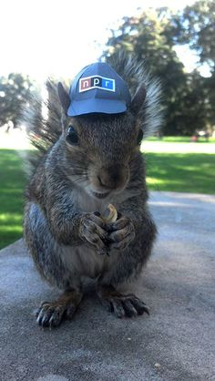 Penn State Squirrel Whisperer Student Dresses Up Campus Squirrel - Student befriends campus squirrels then dresses them in the cutest outfits ever