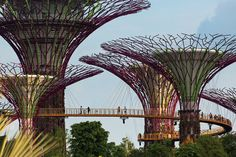 """GARDENS BY THE BAY No less extraordinary is the adjoining grove of vertical gardens by Grant Associates. Visitors can stroll an elevated walkway connecting the """"supertrees,"""" some of which are fitted with photovoltaic cells to harness solar energy Architecture Art Nouveau, Amazing Architecture, Landscape Architecture, Landscape Design, Architecture Design, Architecture Collage, Concept Architecture, Singapore Architecture, Singapore Garden"""