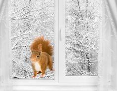 Fensterfolie - Fenstersticker No.298 Eichhörnchen II - Fensterbilder