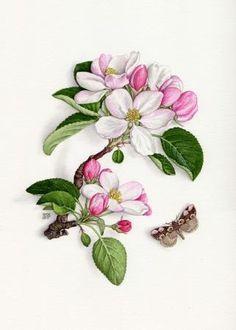 apple blossom drawing - Google-søk