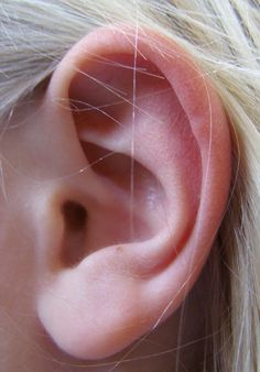 Ear and Hearing. Structure and function of the ear. Diseases of the ear. Ear Anatomy, Anatomy Study, Body Anatomy, Anatomy Drawing, Anatomy Art, Human Anatomy, Human Figure Drawing, Figure Drawing Reference, Human Reference