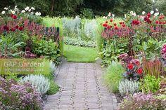 Pathway through summer borders with Santolina, Salvia, Dahlia, Imperata cylindrica Red Baron, Persicariaa Firetail, Origanum vulgare Compactum