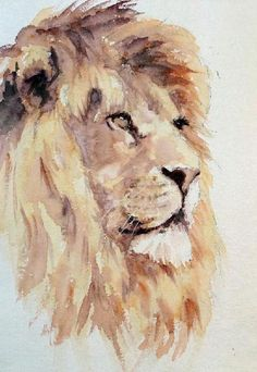 Lion (front view) might be better - idea for my watercolour tattoo