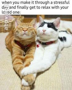 Cute Animal Memes, Cute Animal Photos, Cute Memes, Funny Animal Pictures, Cute Funny Animals, Funny Cute, Cute Cats, Cute Pictures, Funny Pics