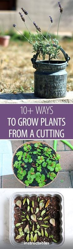 10+ Ways to Grow Plants From a Cutting #gardening