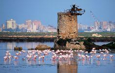 Marsala è uno dei maggiori poli culturali siciliani per il patrimonio storico, paesaggistico ed economico. Vi consigliamo di visitare la Riserva dello Stagnone che regala un paesaggio e un tramonto davvero magnifico. La natura circostante, inoltre, ospita il fenicottero rosa! http://www.bbplanet.it/dormire/marsala