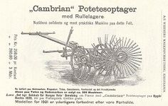 Cambrian potetesopptager 1901
