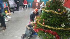 2.12.2015.  Pienet lapset koristelemassa joulukuusta santerin avulla . Joona Lahtinen