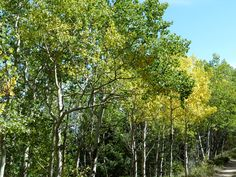 Caribou Ranch Open Space   DeLonde Trail