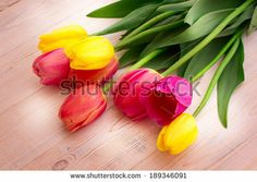 colorful tulips on wooden background - Google Search
