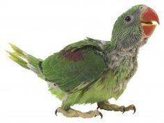 Household Items Dangerous to Pet Birds - Petfinder