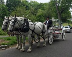 Cinderella Carriage at wedding in Crocheron Park, Queens, NY http://dreamhorsecarriage.com