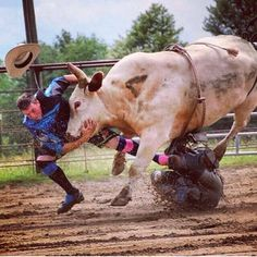 Oh yeah you play football? Lol that's a cute sport! Cowboy Horse, Cowboy And Cowgirl, Cowgirl Style, Amazing Animal Pictures, Rodeo Events, Bucking Bulls, Rodeo Cowboys, Rodeo Life, Bull Riders