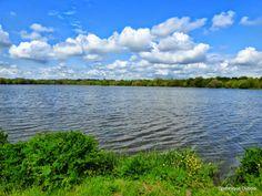 Lac de Beaulieu Coueron 2014-04-22 - 113118434504119207618 - Picasa Albums Web