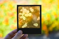 {how to make Polaroid photo transparencies} with Impossible Project film