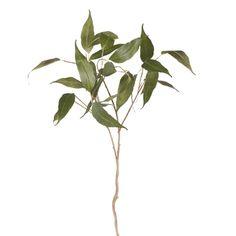 Eucalyptus Leaf Green  92cml Eucalyptus Leaves, Plant Leaves, Green, Plants, Flora, Plant