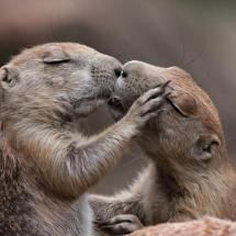 Attitude is everything! - 'Give me a kiss hun!'