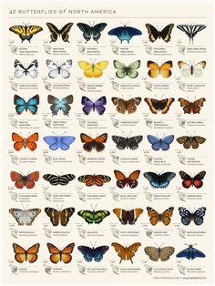 Картинки с бабочками