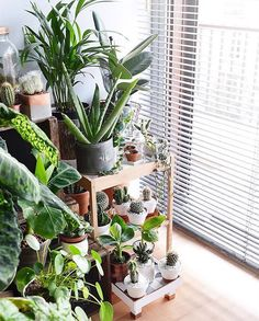 See this Instagram photo by @urbanjungleblog • 4,987 likes