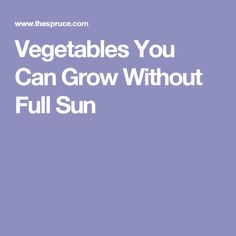 Vegetables You Can Grow Without Full Sun