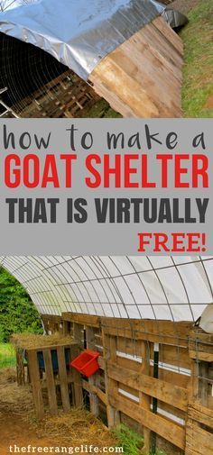 Look at this amazing pallet project! You can make a goat shelter quickly for next to nothing in cost The Farm, Small Farm, Mini Farm, Cabras Boer, Goat Shelter, Sheep Shelter, Goat Pen, Goat House, Goat Care