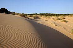 Beach, Water, Outdoor, Dune, Scenery, Water Water, Outdoors, Aqua, Outdoor Games