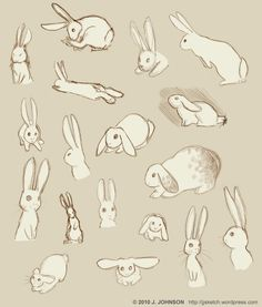"""Rabbit Language or """"Are you going to eat that?"""" A humorous guide to communicating with your pet rabbit ...lol <3"""