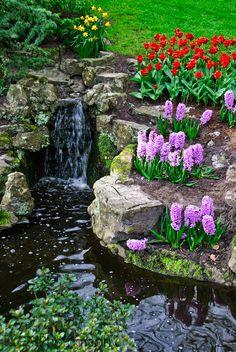 keukenhof | 101604 keukenhof 0081 Keukenhof Tulip Gardens 2010