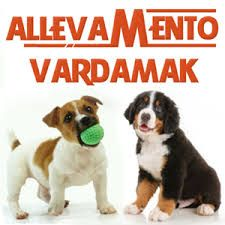 http://www.allevamentovardamak.it/