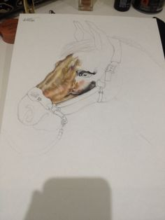 Beginning of my horse drawing
