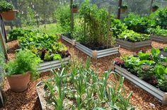 Great vegetable garden - urban farming