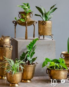 These brass planters lend an ethnic Indian touch to your garden. Explore more of these at our store or website today! Ethnic Home Decor, Indian Home Decor, Diy Home Decor, Living Room Nook, Terrace Decor, Copper Interior, Brass Planter, Indian Living Rooms, Decorative Planters