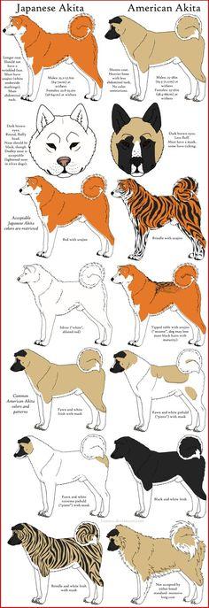 Akita Breeds Comparison by Leonca on deviantART