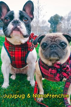 Items similar to Red Pink Plaid dog harness vest, Step in tartan dog harness, Christmas dog harness, girl Boy Puppy dog harness, French bulldog Pug harness on Etsy Dog Collar Boy, Girl Dog Collars, Puppy Collars, Boy Dog, Girl And Dog, Dog Harness, Dog Leash, Pet Dogs, Dog Cat
