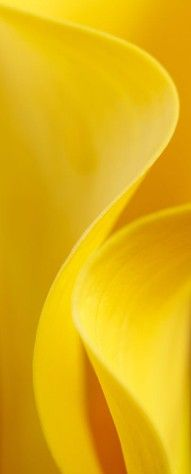 A colourful life: Mellow yellow