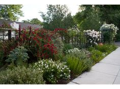 Chevy Chase is the splash of red with melianthus and phormium lending a touch of the exotic.