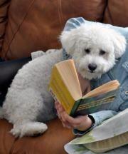 Dogs like a good story, too ...