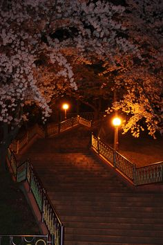 Evening in Cheonchung, South Korea when the Cherry Trees were blooming. Cherry Tree, Nature Images, Pathways, South Korea, Landscapes, Wanderlust, Bloom, Trees, Felt