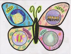 Adorable Butterfly Life Cycle Project with free download, from Totally Terrific in Texas