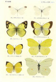 entomology images