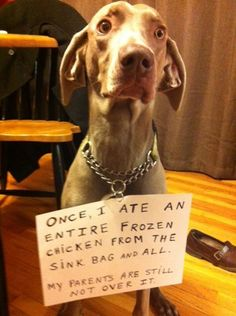 Dog Shaming features the most hilarious, most shameful, and never-before-seen doggie misdeeds. Join us by sharing in the shaming and laughing as Dog Shaming reminds us that unconditional love goes both ways. Funny Animal Pictures, Dog Pictures, Funny Animals, Cute Animals, Animal Antics, Animal Memes, Dog Memes, Funny Memes, Dog Humor