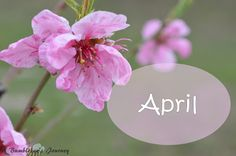 A Bumblebee´s Journey: Top 5 of April - Monthly Favorites