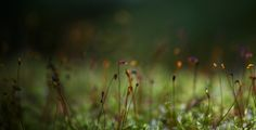 Moss Spores, Vermont 2013. How magical is this!
