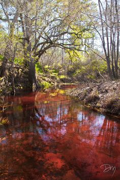 Red Waters Florida Trail, Cypress Knees, Canopy Lights, Big Sky, Green Trees, Spring Day, Get Outside, State Parks