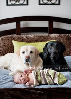 I HAVE to do this pic!!!!  Too cute! if my dogs cooperate.  yikes