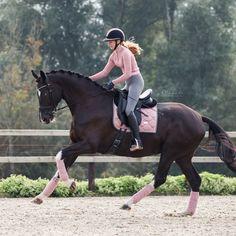 Cute Horses, Pretty Horses, Horse Love, Horse Stables, Horse Barns, Horse Fashion, Horse Gear, English Riding, Dressage Horses