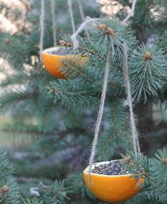 Brilliant! Use orange rinds as eco-friendly, biodegradable bird feeders.