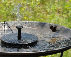 A solar birdbath fountain has been one of the best additions to my yard's bird habitat, attracting birds of all kinds. They drink and bathe, and watching them in the bath is great fun to watch. Here's some hints on...