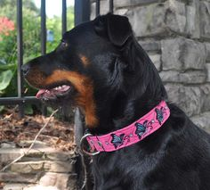 "Zoey wearing Pet Necklace ""Soar Like a Butterfly"" Design Dog Collar in fuschia with black and peacock thread."