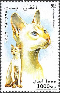 Cat postage stamp - lick the stamp and the cat licks you back! #CatStamp #PostageStamp
